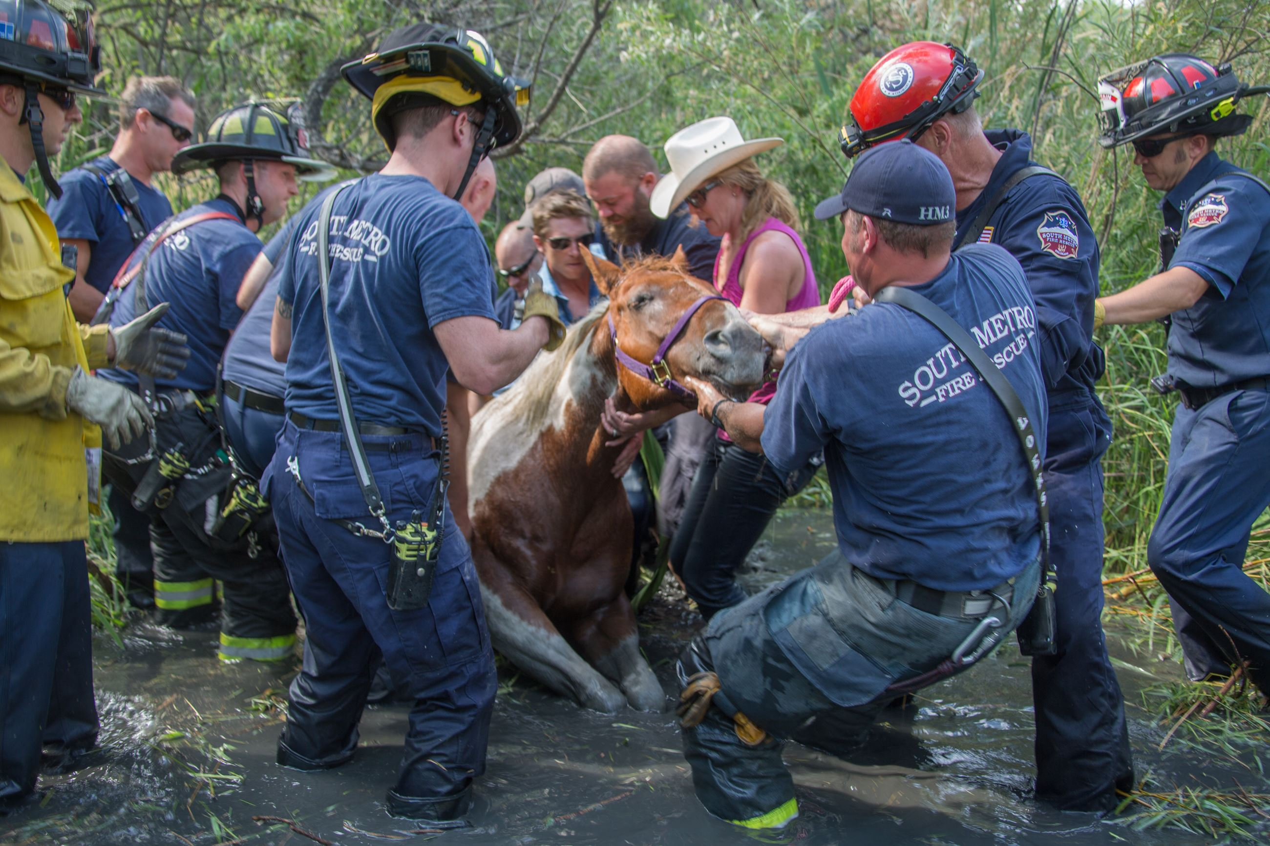 Firefighters Saving a Horse